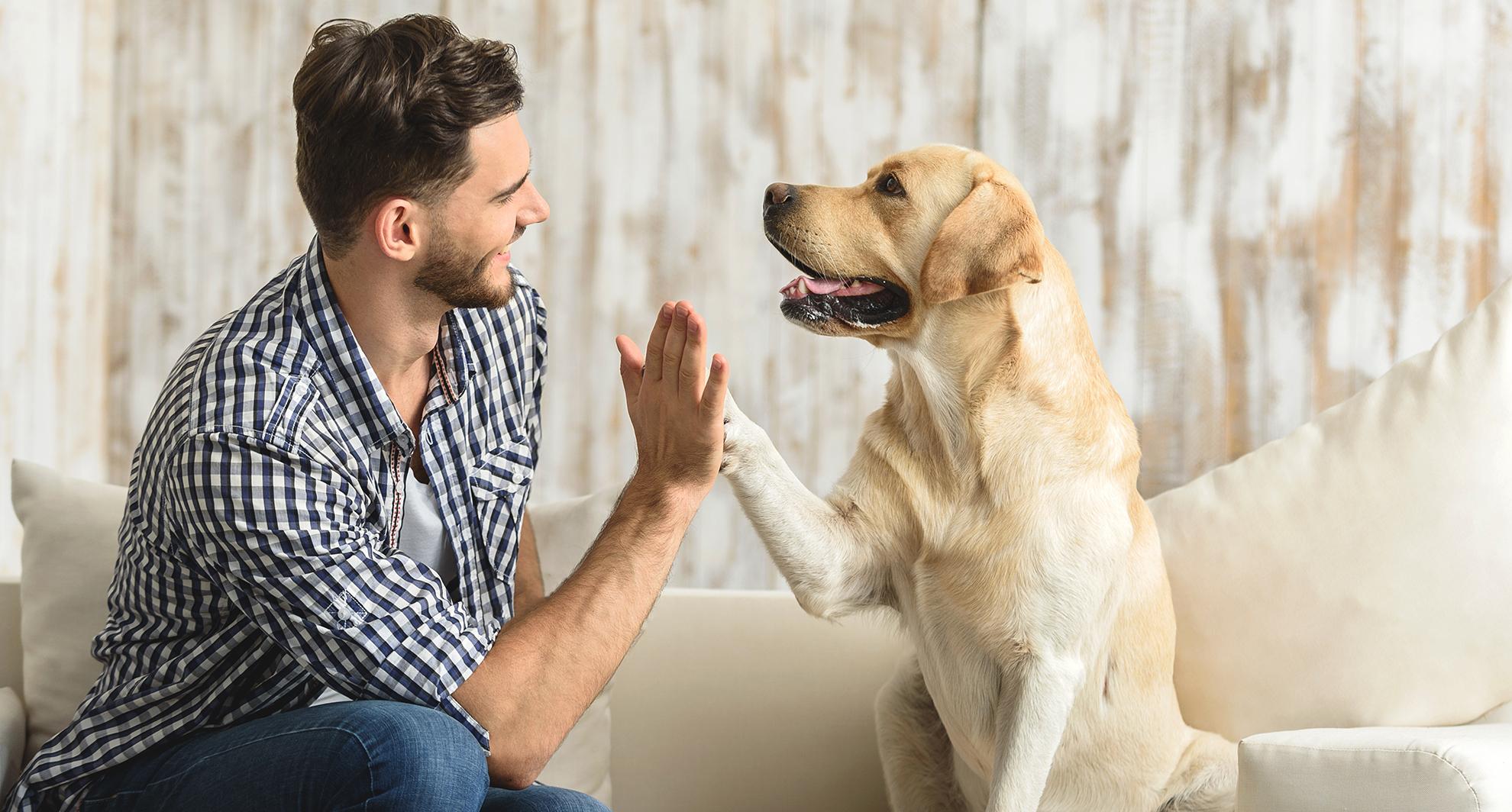 La fisiatría mejora el vínculo <br>entre propietario y mascota